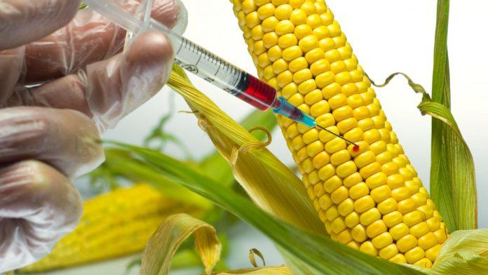 Γερμανία: Η μελλοντική κυβέρνηση θα πρέπει να δεσμευτεί για τους ΓΤΟ