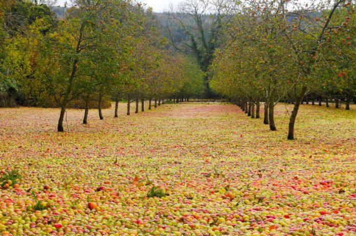 Η γεωργία στο έλεος των στοιχείων της φύσης