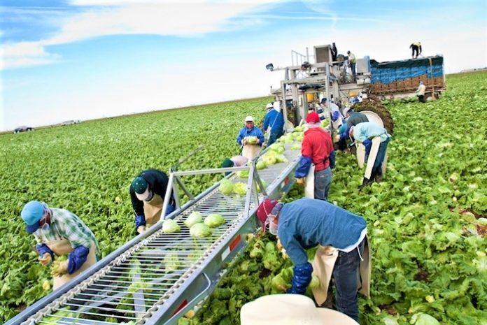 Ολοκληρώθηκε η υποβολή αιτήσεων στήριξης για το μέτρο των Ομάδων και Οργανώσεων Παραγωγών
