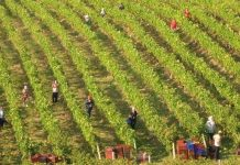 ΔΑΟΚ Λακωνίας: Μέχρι τις 15/01/2019 οι δηλώσεις Επεξεργασίας ή Εμπορίας – Αποθεμάτων Οίνου