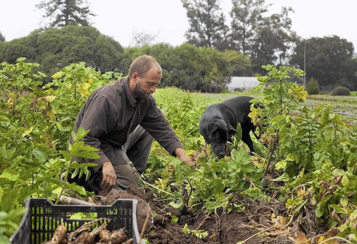 Έχει ιδιαίτερη σημασία ότι στην ΕΕ η αγροτική περιουσία, όπως και το αγροτικό επάγγελμα, συχνά κληρονομούνται από πατέρα σε γιο