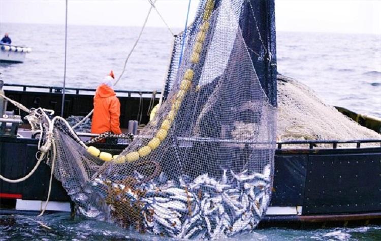 Όλες οι νομοθετικές αλλαγές στον κλάδο της αλιείας – Ποια νέα μέτρα ενεργοποιούνται