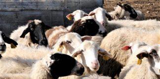 Ολοκληρώθηκε πρόγραμμα υποτροφιών της ΔΕΛΤΑ για 25 νέους κτηνοτρόφους