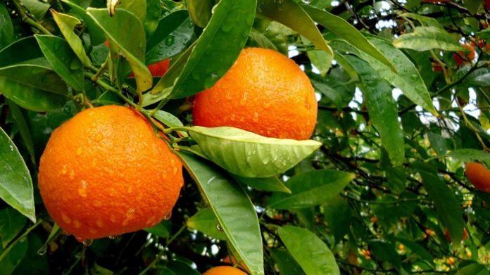 Πορτοκάλι: Βαθιά ανάσα μετά από καιρό για τη Ναβαλίνα