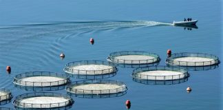 Συστάθηκε ο νέος φορέας διαχείρισης των υδατοκαλλιεργειών του Θερμαϊκού Κόλπου