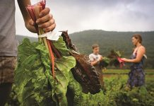 Τα κριτήρια για τη δεύτερη προκήρυξη της Βιολογικής Γεωργίας