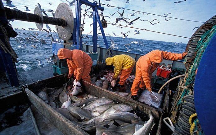 Ξεκίνησαν οι αιτήσεις για παύση των αλιευτικών δραστηριοτήτων (Δικαιολογητικά)