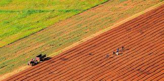 Απολογισμός φυτικής παραγωγής 2017