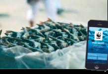 Ασφάλεια και περιβαλλοντική προστασία µέσω της πρωτότυπης εφαρµογής Fish Guide
