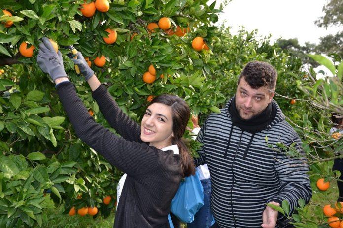 Το Γεωπονικό Πανεπιστήμιο παρέδωσε 400 κιλά πορτοκάλια στον Κόμβο Αλληλοβοήθειας Πολιτών