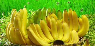 Ο κίνδυνος της εξαφάνισης απειλεί ξανά την μπανάνα