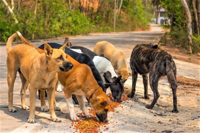 Η ελληνική νομοθεσία για τα ζώα συντροφιάς και τα αδέσποτα στην Ελλάδα