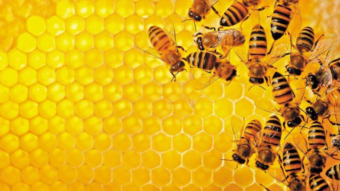 Μέλι: Οι τιμές Κίνας...βούτυρο στο ψωμί των κερδοσκόπων