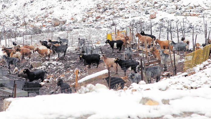 Οι προετοιµασίες των κτηνοτρόφων για την κακοκαιρία