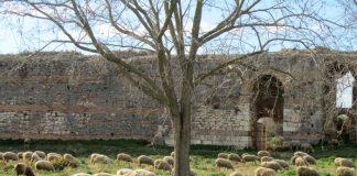 Arxaia-Nikopolis-Provata