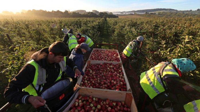 Ο αγροτικός τομέας της Ευρώπης συνεχίζει να βασίζεται στη μερική απασχόληση και στην οικογενειακή εργασία