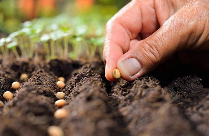 Αμυράς: Να εκσυγχρονιστεί η νομοθεσία για το φυτικό πολλαπλασιαστικό υλικό