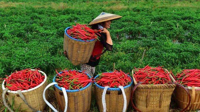 Το ηλεκτρονικό εμπόριο μετατρέπει τους κινέζους αγρότες σε εκατομμυριούχους