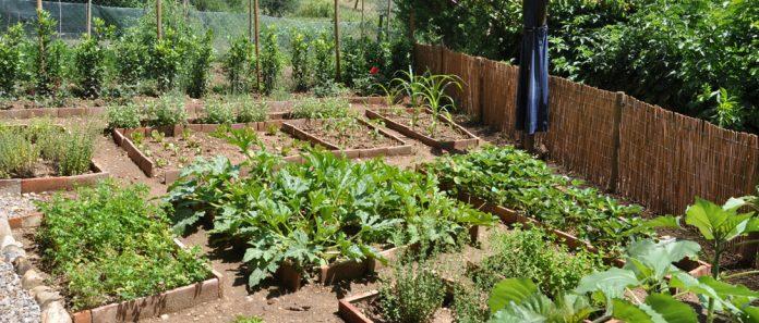 Για όγδοη χρονιά το ΑΠΘ προσφέρει...λαχανόκηπους