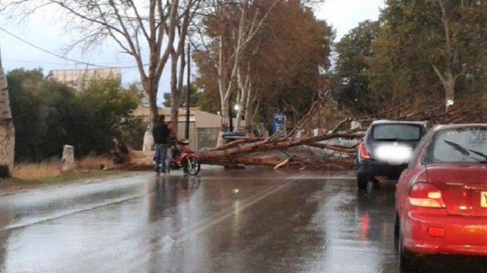 Λάρισα: Ισχυροί άνεμοι προκάλεσαν πτώσεις δένδρων στη πόλη