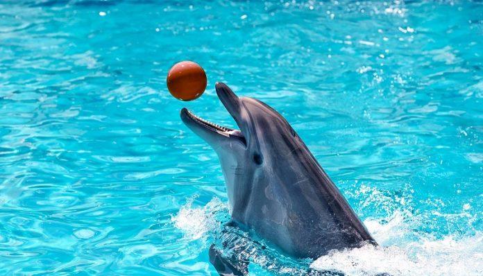 Μήνυση ProWal κατά του Αττικού Πάρκου για εγκληματική συμπεριφορά στα δελφίνια