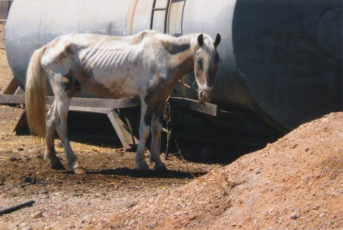 Να πώς ζουν άλογα, γαϊδούρια και μουλάρια στην Ελλάδα (Φωτό)