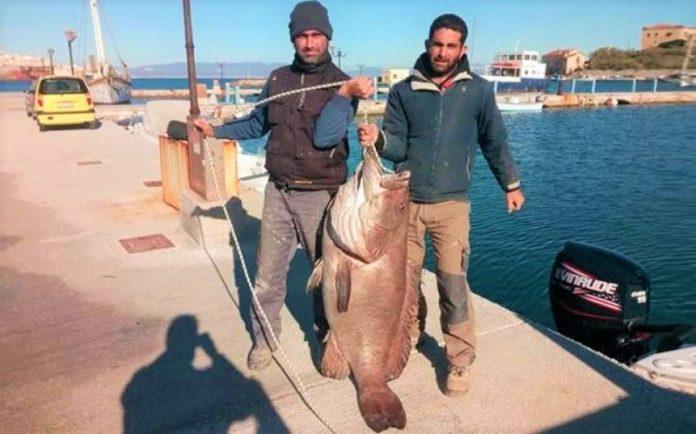 Ψαράς έπιασε με καλάμι σφυρίδα γίγας που ζύγιζε 63 κιλά (Βίντεο)