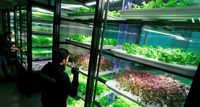 Λαχανικά του κουτιού infarm