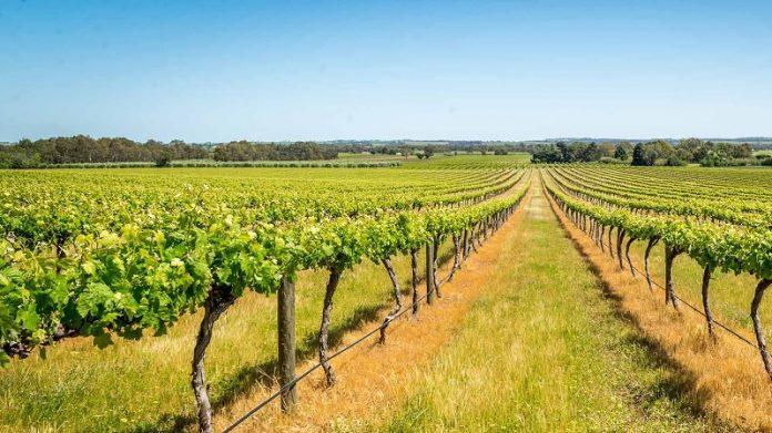 Από 24 έως 26/ Αυγούστου η 59η Γιορτή Κρασιού Αμπελώνα Λάρισας