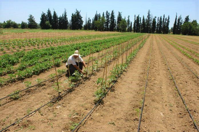 Φυτρώνει... ελπίδα στο αγρόκτημα της θεραπευτικής κοινότητας ΙΘΑΚΗΣ