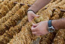 Πληρωμές για την ολοκληρωμένη διαχείριση στην παραγωγή καπνού