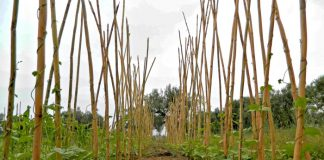 Νέες Τεχνολογίες στην Καλλιέργεια των Φασολιών