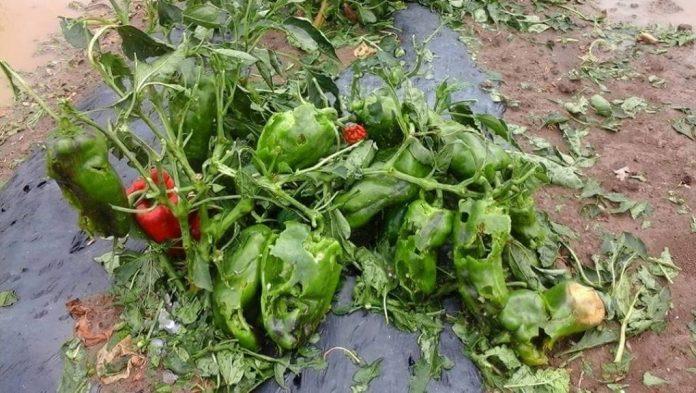 Κρήτη: Πληρώνονται αποζημιώσεις των αγροτών