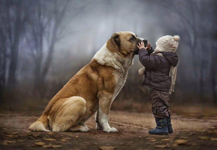 Αποσύρθηκε το νομοσχέδιο του ΥΠΑΑΤ για τα ζώα συντροφιάς