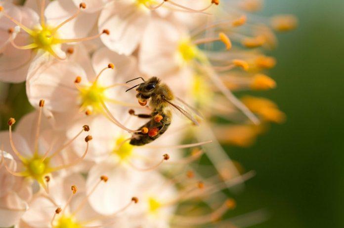Bayer: Mελέτη με εκπαιδευτικά και ερευνητικά ιδρύματα για την ευαισθησία της μέλισσας στα εντομοκτόνα
