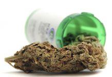Σαράντα τρεις φάκελοι έχουν κατατεθεί για καλλιέργεια και επεξεργασία προϊόντων φαρμακευτικής κάνναβης