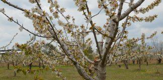 Γιάννης Κλάδος: Σταδιακή στροφή στις δενδρώδεις καλλιέργειες στο νομό Ροδόπης