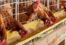 Κατάργηση του συμπληρωματικού ΕΝΦΙΑ στα αγροτοκτηνοτροφικά ακίνητα ζητούν οι πτηνοτρόφοι