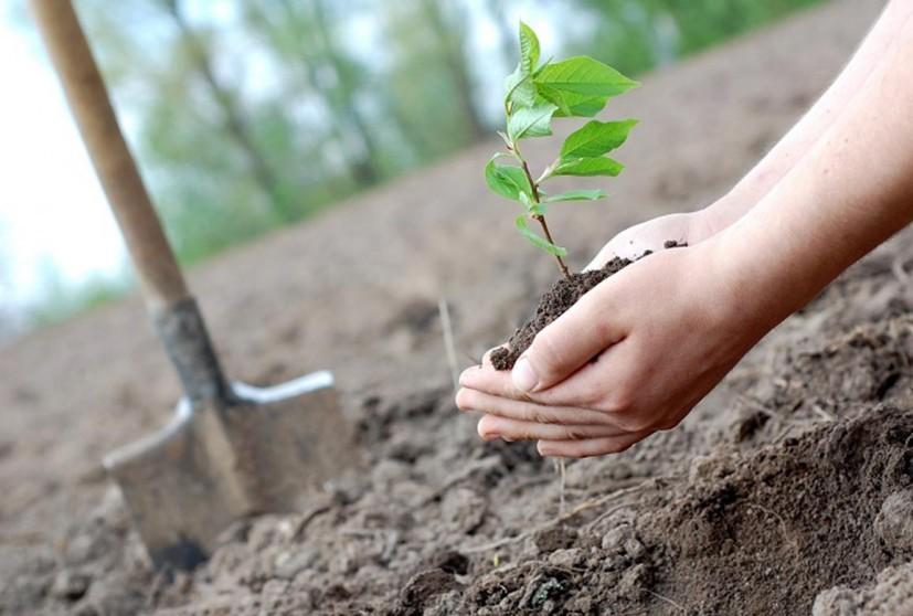 Ροδόπη: Απάντηση Αποστόλου σχετικά με το πρόγραμμα δάσωσης αγροτικών γαιών