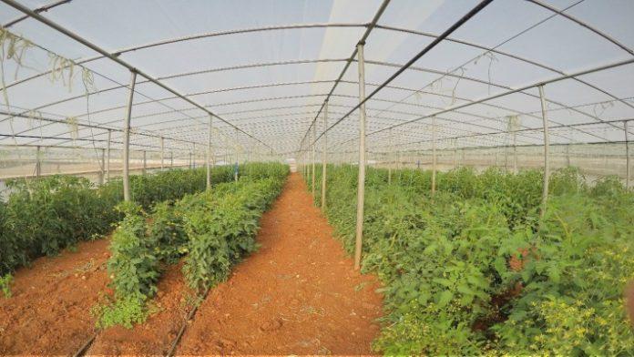 tomata-tympaki