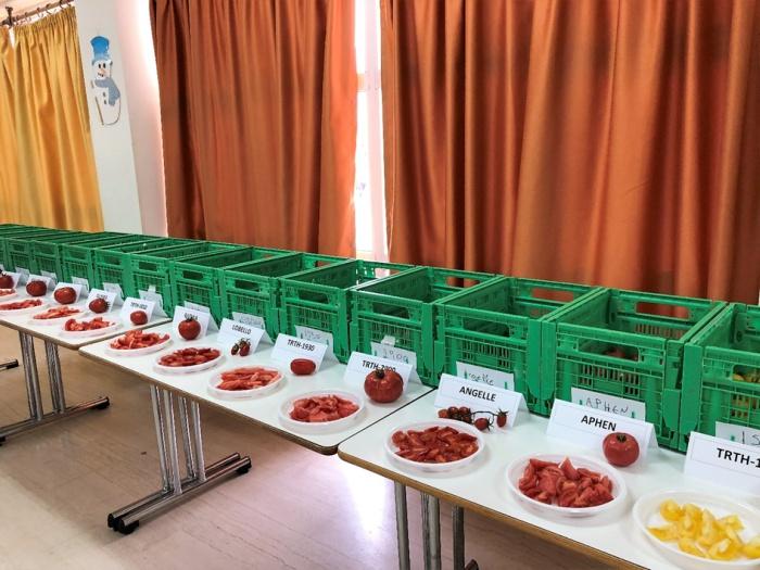 Οι δεκαπέντε ποικιλίες και υβρίδια που δοκίμασαν οι μαθητές του 3ου Δημοτικού Σχολείου Τυμπακίου.