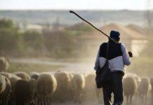 Κρήτη: Αύξηση κατά 16 εκ. ευρώ του προϋπολογισμού για την Βιολογική κτηνοτροφία