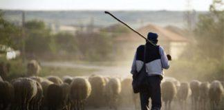 Λάρισα: Πληρωμή Βιολογικής Κτηνοτροφίας