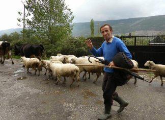 Αλβανία: Σχέδιο για αιγοπρόβατα - αγελαδινό γάλα