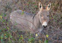 Σε διαβούλευση έως 10/ 9 ο κανονισμός αναγνώρισης των ιπποειδών