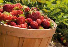 Φράουλα, ένα φάρμακο για το στομάχι;