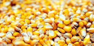 Ρουμανία: Ανακάμπτει η παραγωγή σιτηρών