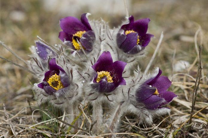 Στολίστε τα παρτέρια με αυτοφυή καλλωπιστικά φυτά αναφέρει έρευνα του ΤΕΙ Δράμας
