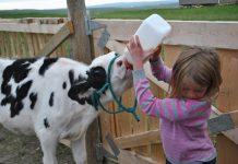 Η διαβίωση κοντά σε ζώα κτηνοτροφίας μειώνει τον κίνδυνο αλλεργιών και ψυχικών διαταραχών