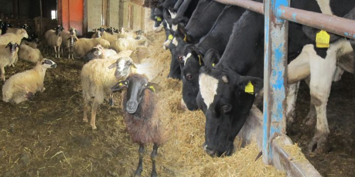 Και η πρώτη ομάδα παραγωγών στο Νομό Ιωαννίνων έγινε πράξη. Πρόκειται για την ομάδα προβατοτρόφων, αιγοτρόφων και αγελαδοτρόφων του Γενικού Αγροτικού Συνεταιρισμού Ιωαννίνων.